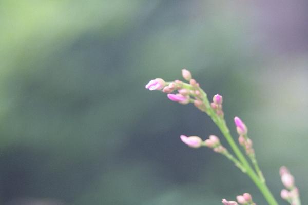 keyaki-001036s.jpg