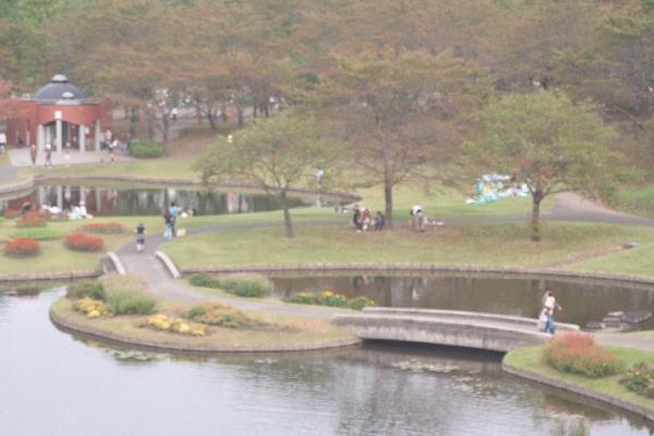keyaki-001208s.jpg