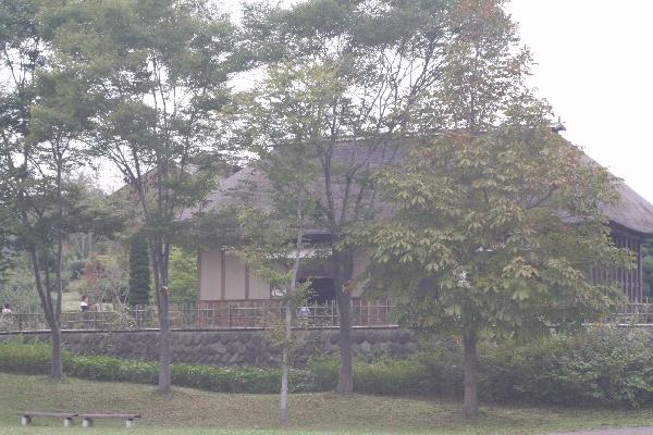keyaki-001215s.jpg