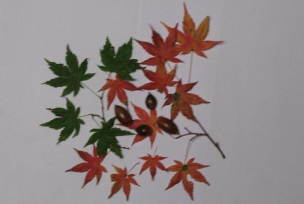 keyaki-001262s.jpg