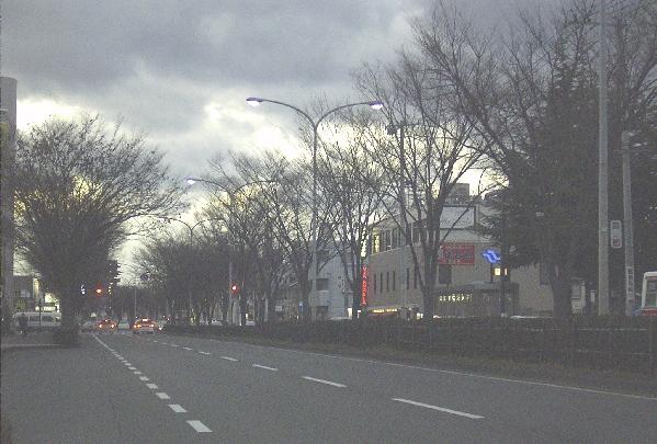 keyaki-001321s.jpg