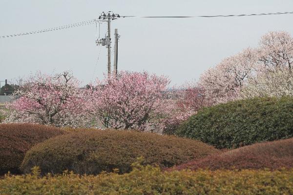 keyaki-00600fs.jpg