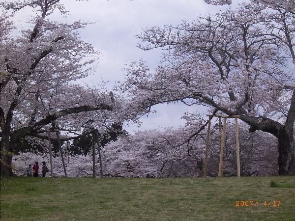 keyaki-00661fs.jpg
