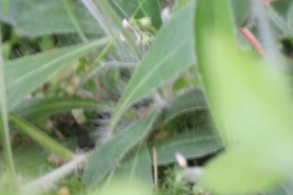 keyaki-00849fs.jpg