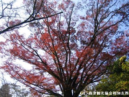 hirayama2007111702.jpg