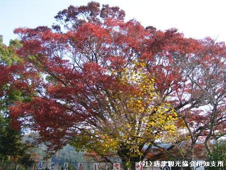 hirayama2007111703.jpg