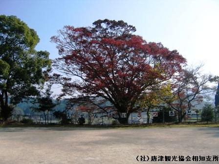 hirayama2007111704.jpg