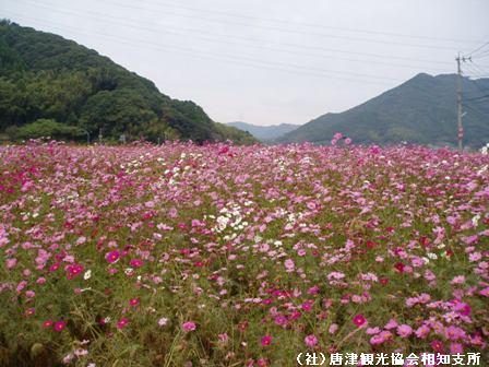 yamasaki2007110501.jpg