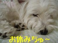 おやすみちゅ~