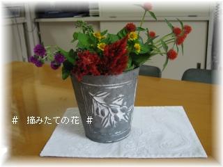 摘みたてのお花