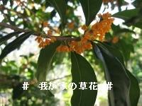 20061010201153.jpg