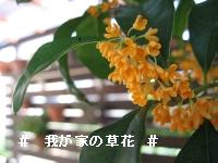 20061010201211.jpg
