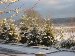snowing08.jpg