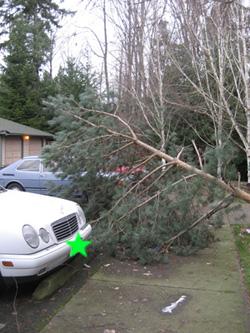 windstorm02.jpg