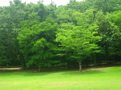 龍田自然公園2
