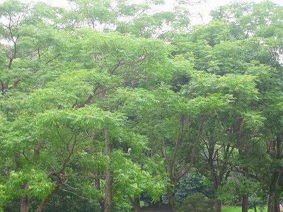 木々風景1H19.7.15