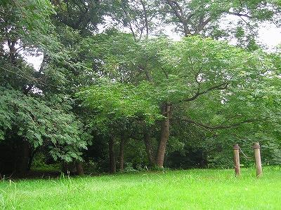 木々の風景2H19.7.15