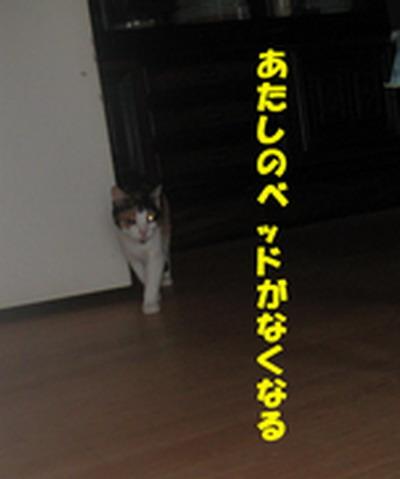 20070712164931.jpg