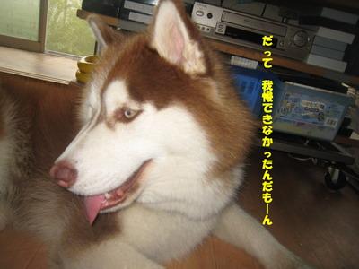 IMG_5747いいわけ