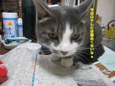 IMG_5874ぷう テレビ欄