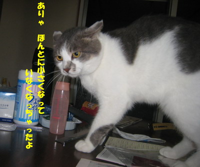 IMG_5880ぽん