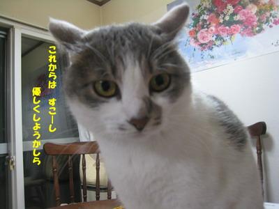 IMG_5882ぽん