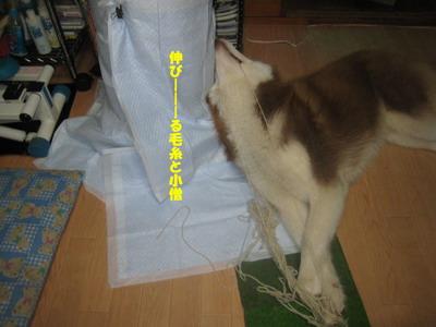 IMG_5975毛糸