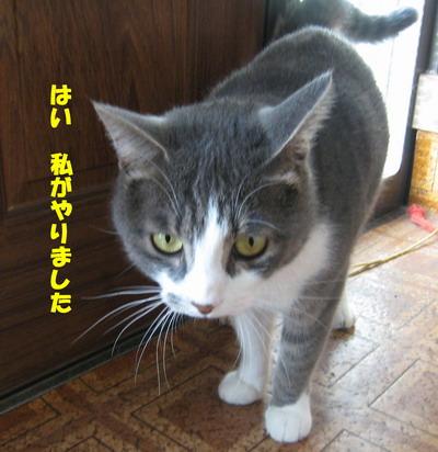 IMG_7356ぷう