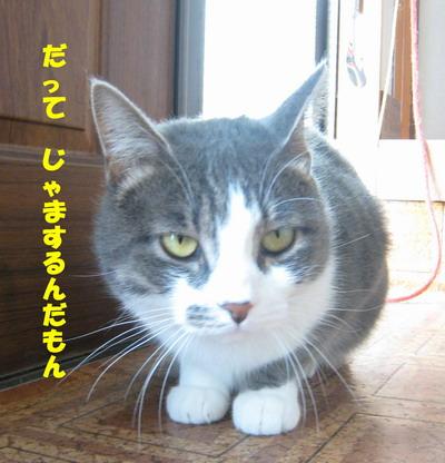 IMG_7357ぷう