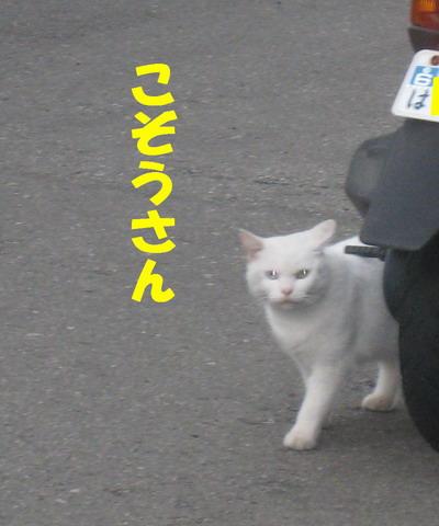 IMG_7959しろちゃん