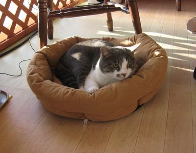 IMG_8091猫ベッド