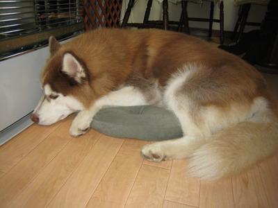 IMG_8144猫ベッド