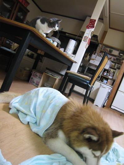 IMG_8426きーふぁーとぷう