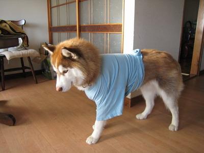 IMG_8458初Tシャツ