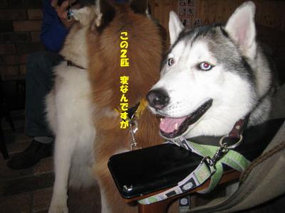 IMG_8497オーちゃん