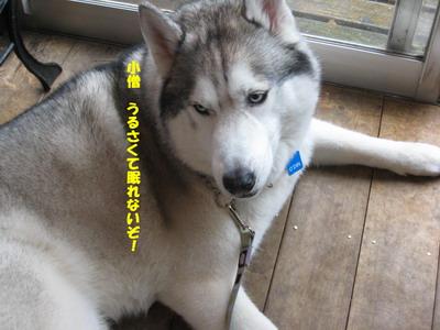 IMG_8765オーちゃん
