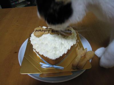 IMG_9012ちょことケーキ
