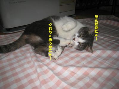 IMG_9037ぷう