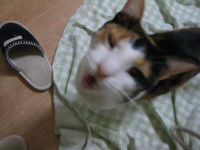 IMG_9149ちょこ