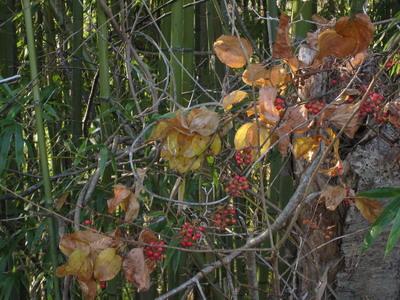 IMG_9470木の実