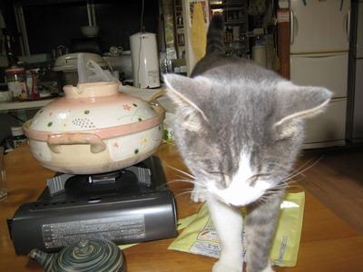IMG_9693猫鍋
