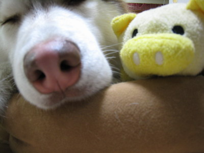IMG_9702豚鼻