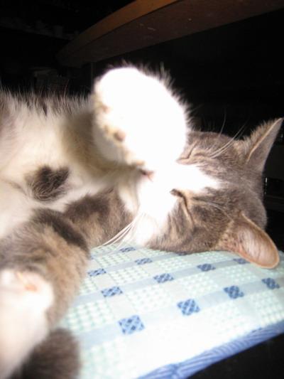 IMG_9710猫パンチ