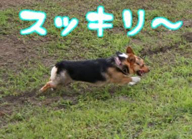 ボニー走ります(!?)