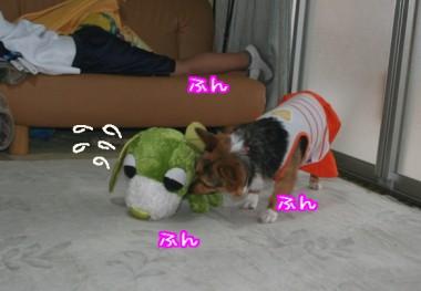 あ~れ~ (お茶犬)