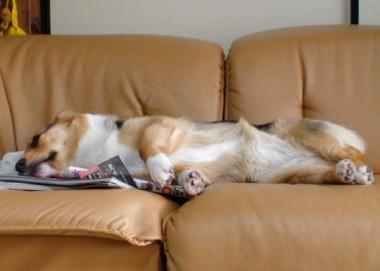 図書館で借りた本の上で寝てる