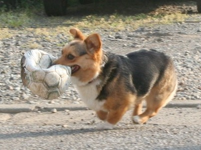 既にサッカーボールとは呼べない