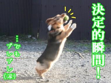 ナイスキャッチ!!