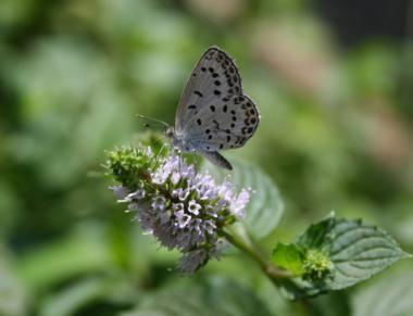 蝶ならもっと絵になった
