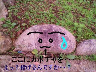 kabotyasu-pu(1